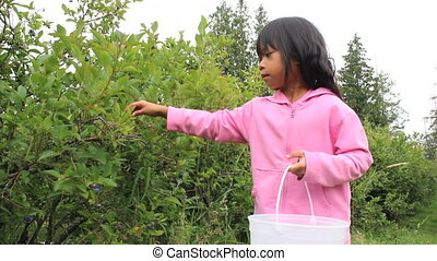 Happy Blueberry Picker - A cute little Asian girl happily...