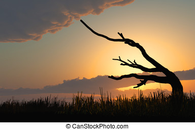 Dead Tree Sunset Sunrise - Silhouette dead gnarly tree in a...