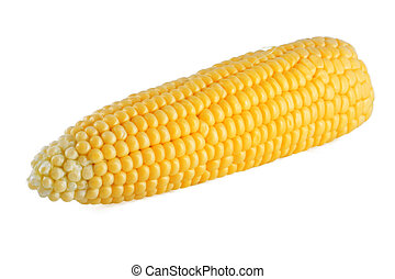Fresh corn on the cob, isolated on a white background