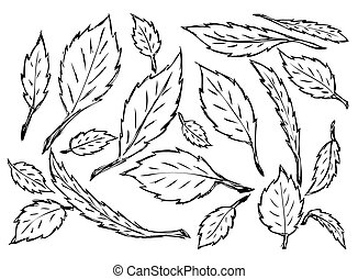 hand drawn leaves isolated on the white background