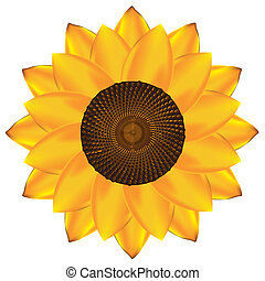 Abstract vector sunflower