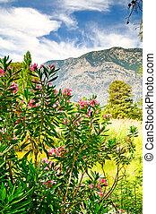 Mountains, Blomstrar, underbar, sommar, landskap