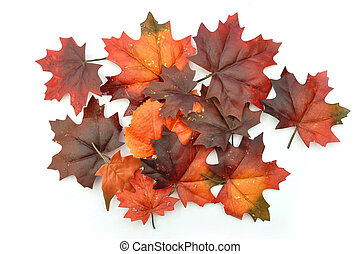 Autumn leaves - Autumn maple leaves on a white background