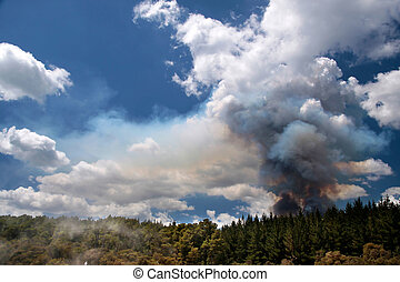 Forest fire in the Wai-o-Tapu geothermal area in Rotorua,...