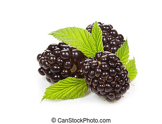 blackberries with leafs on a white background
