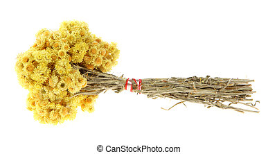 Medicinal herbs, Helichrysum - Medicinal herbs on the white...