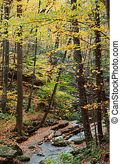 Autumn woods with yellow maple trees and creek with rocks...