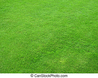 Beautiful green lawns perfectly cut for background...