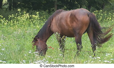 horse 11 - brown horse on a meadow