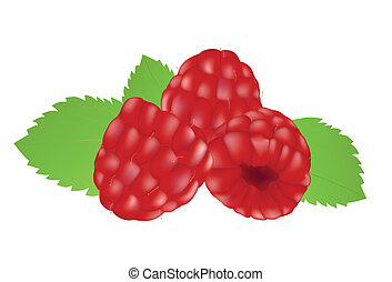 Raspberries on the white background. Mesh.