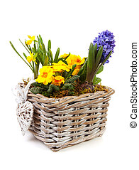 Basket spring flowers over white background