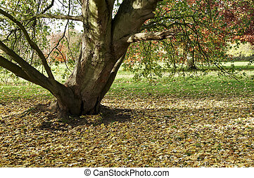 Autumn trees - Trees in a park in Autumn