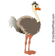 nice young ostrich - illustration nice young ostrich on...