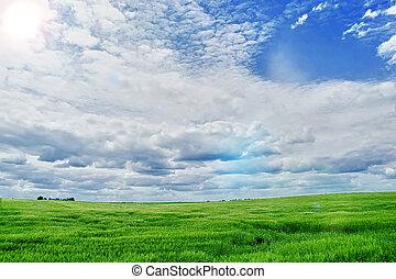 summer landscape  - summer landscape