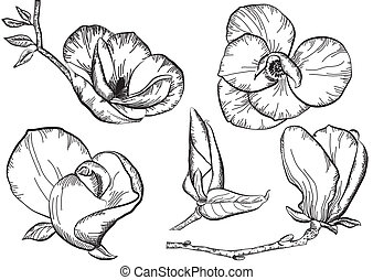 Flowers. - Vintage flowers for design.Isolated floral vector...