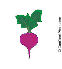 Vegetable,  beet with green leaves, vector