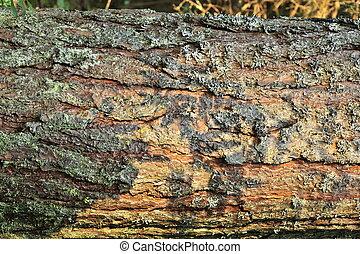 Fur-tree bark. Summer.