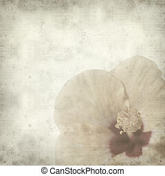 textured old paper background with yellow hibiscus