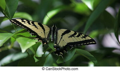 butterfly in the shadows