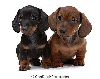Pair of Smooth-haired Dachshunds