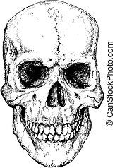 Grinning skull illustration