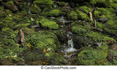 Mossy stream Two shots - Beautiful stream with moss-covered...