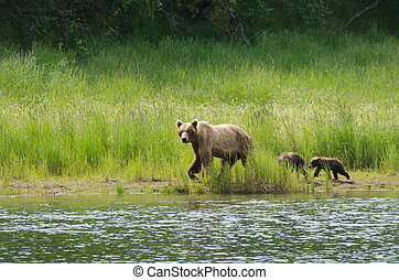 Female Alaskan brown bear with cubs