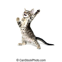 Cute kitten playing on white background - Cute baby cat...