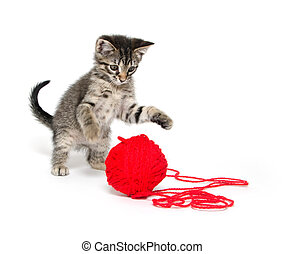 Cute tabby kitten playing with yarn - Cute baby tabby cat...