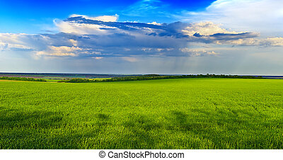 blauwe, Hemel, gras, groene