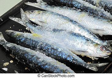 Cozinhar, fresco, sardinhas