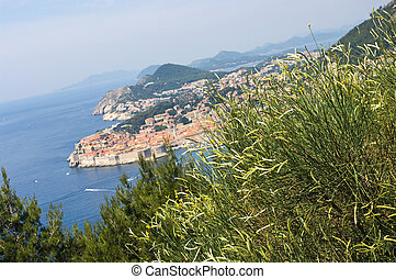 View on Dubrovnik with clump of grass on first plan, Croatia