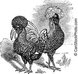 Male and female of Polish chicken vintage engraving - Male...