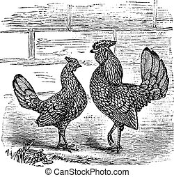 Two Bantam chicken vintage engraving - Two Bantam chicken,...