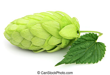Hop close up on the white