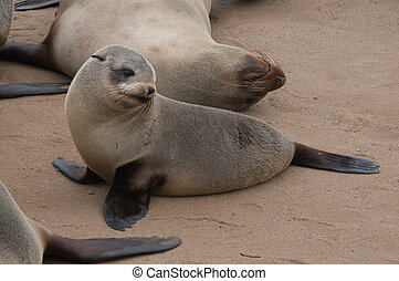 Sea Lion - Mommy and Baby sea lions photographed in Cape...
