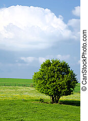Tree in the country