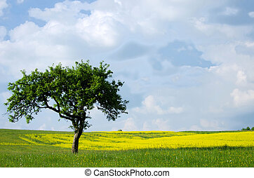 Tree in the grassland