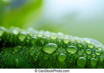 Waterdrops on leaf