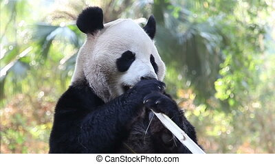 eating panda - 720p