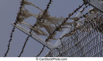 Barb Wire Backplate - Barbwire at top of fence, wind blows...