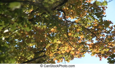 Fall leaf background - rustling leaves in the wind