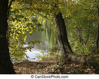 Tree and leaves in Central Park New York