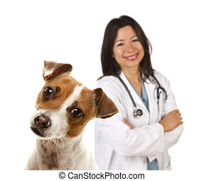Jack Russell Terrier and Female Veterinarian Behind -...