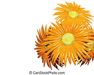 Gerbera orange daisy