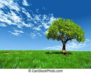Tree in grassy field