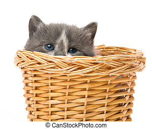 small cute kitten sitting in a basket, close-up