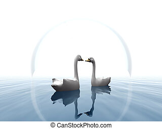 Two swans in water