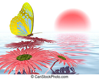 Butterfly on a gerbera daisy