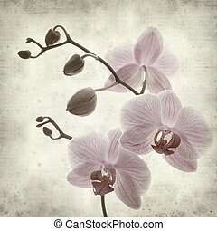 textured old paper background with phalaenopsis; - textured...